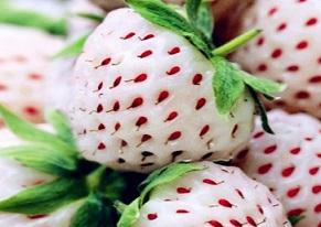 Бяла ягода